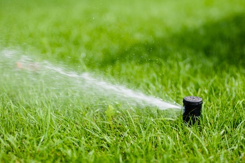 Lawn Enforcement: Proper Watering for Grass and Garden