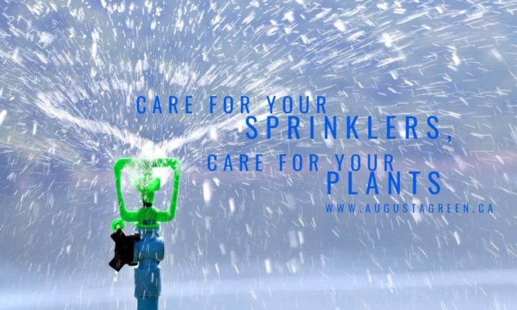 Care for your sprinklers, care for your plants