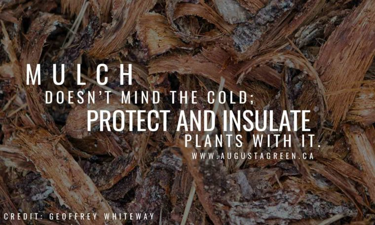 Mulch doesn't mind the cold; protect and insulate plants with it.
