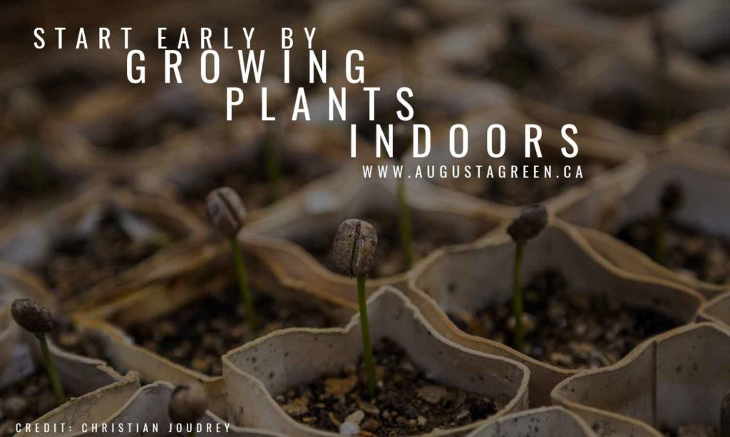 Start early by growing plants indoors