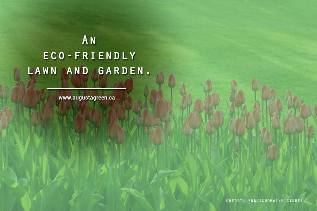 An eco-friendly lawn and garden