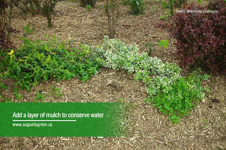 add a layer of mulch