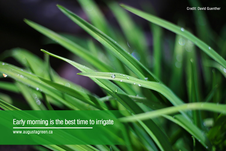 best time to irrigate