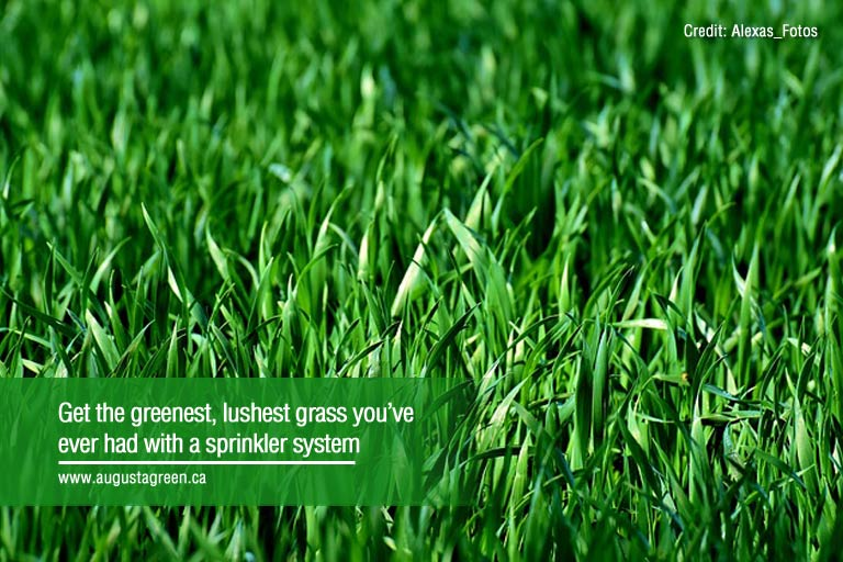 lushest grass you ever had