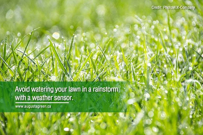 avoid watering your lawn