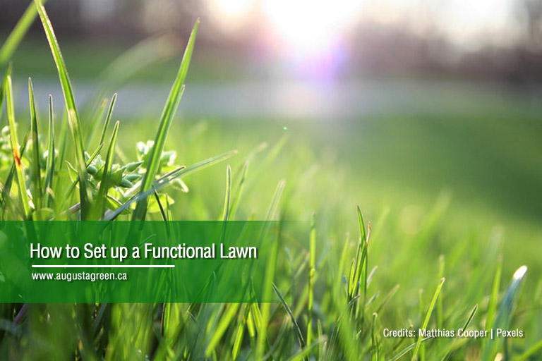 How to Set up a Functional Lawn