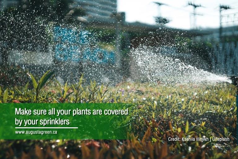 make sure all plants