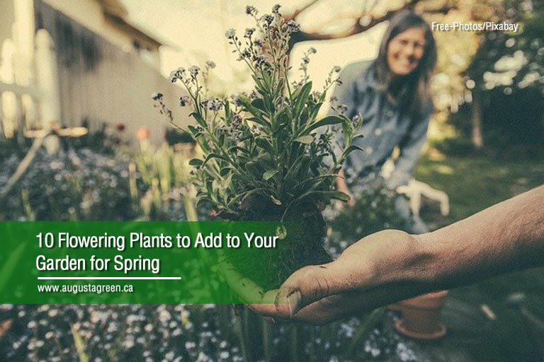10 Flowering Plants to Add to Your Garden for Spring