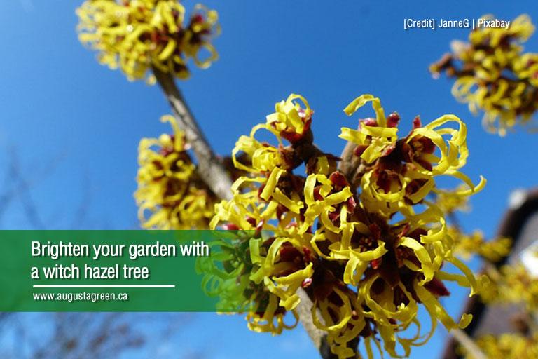 brighten your garden