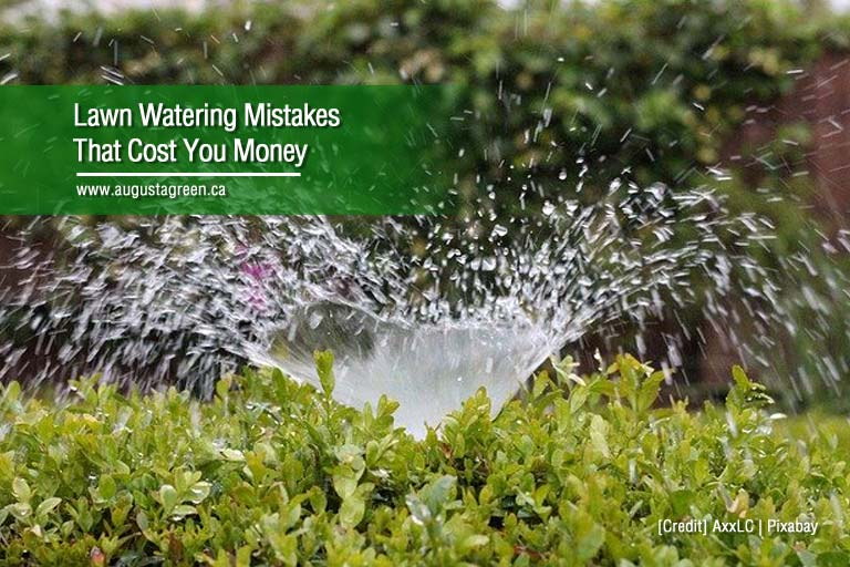 Lawn Watering Mistakes That Cost You Money