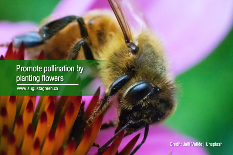 promote pollination