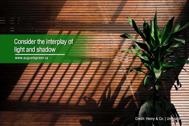 consider interplay of light