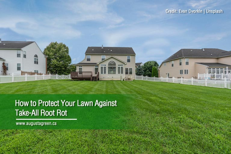 How to Protect Your Lawn Against Take-All Root Rot