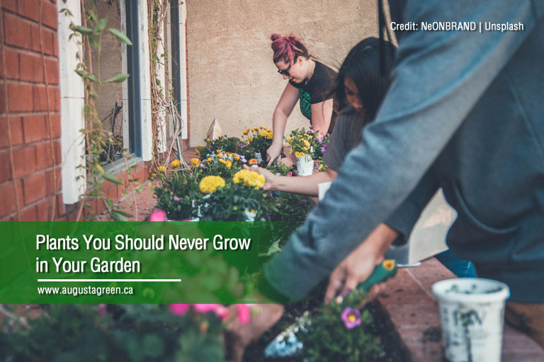 plants you should never grow