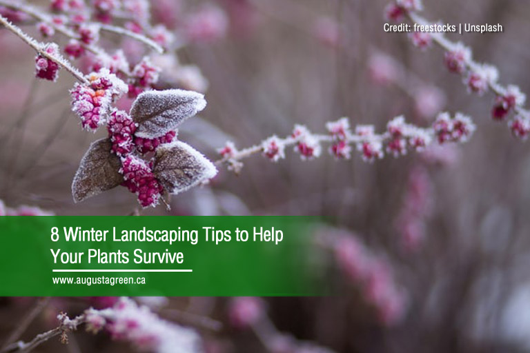8 Winter Landscaping Tips to Help Your Plants Survive