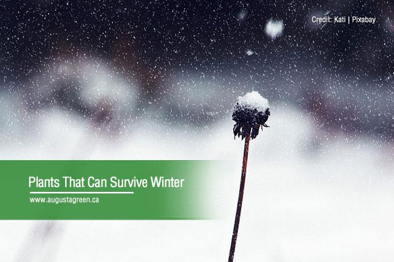 Plants That Can Survive Winter