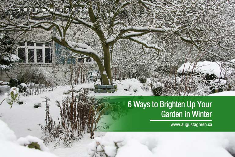 6 Ways to Brighten Up Your Garden in Winter