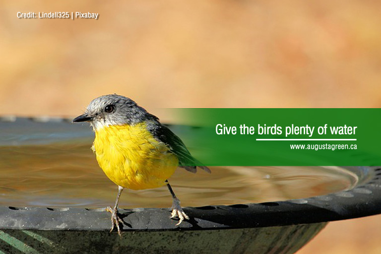 Give the birds plenty of water