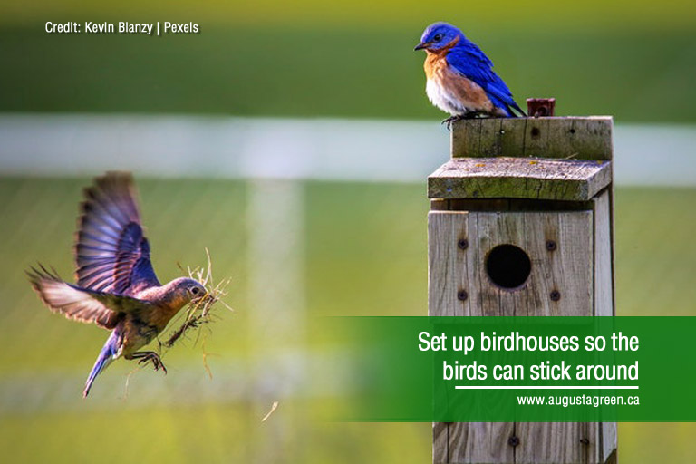 Set up birdhouses so the birds can stick around