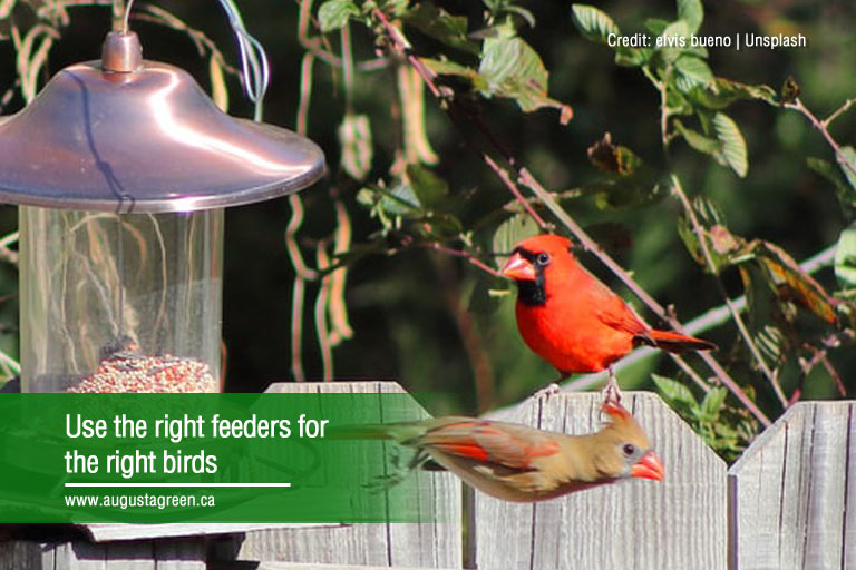 Use the right feeders for the right birds