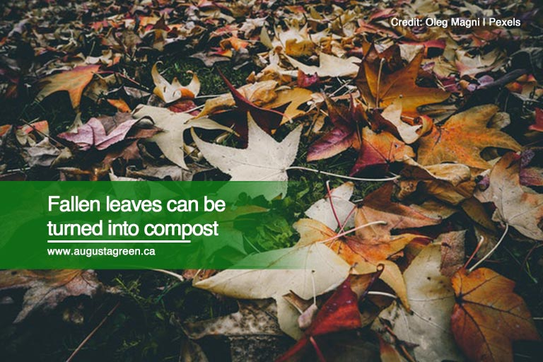 Fallen leaves can be turned into compost